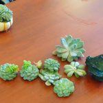 Succulents and gourds make such beautiful centerpieces!